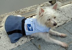 Lupita the Mail Dog